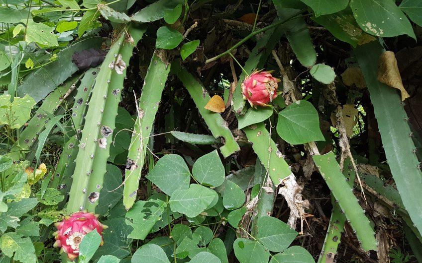 Venta de Finca en Masaya San juan la concha