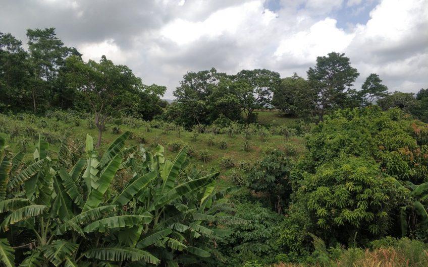 Terreno de 2 Manzanas Precio Ganga – Cebadilla