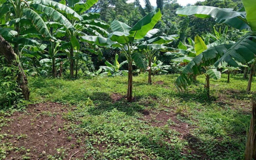Se vende terreno de tres manzana en ticuantepe