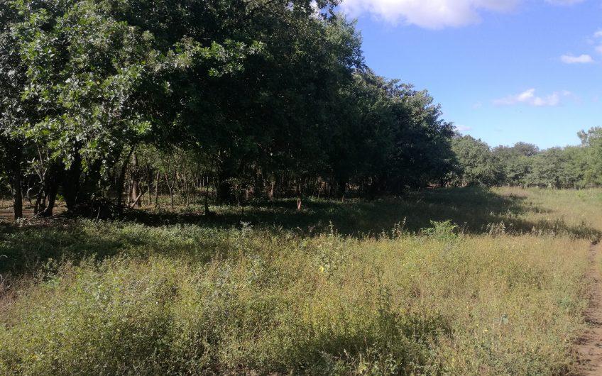Se vende Terreno/ en Veracruz