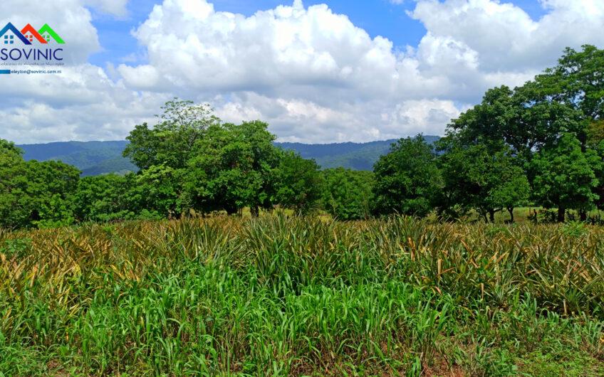 Lote de tierra de una Manzana ½ en venta carretera Masya Ticuantepe
